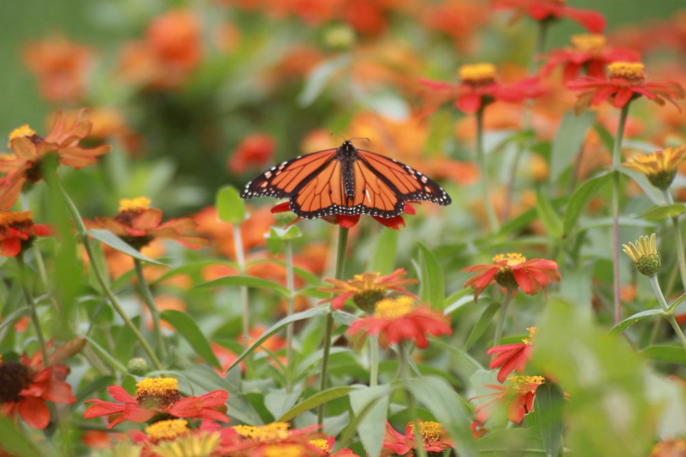 Reid Bruner's photograph of a butterfly