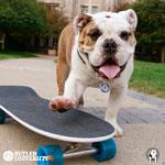 Trip_Skateboard